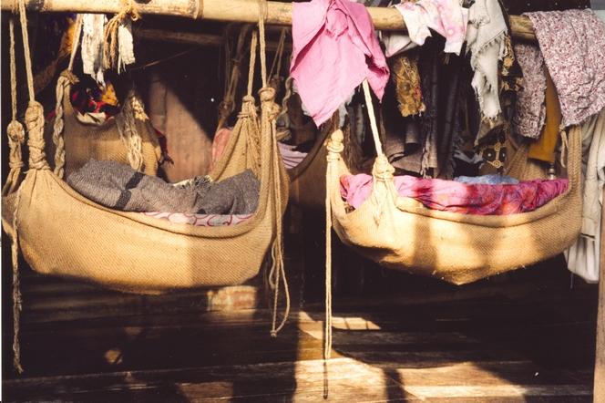 Des couffins suspendus dans les plantations de thé