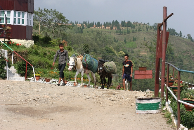 Le cheval, aide indispensable pour transporter le thé