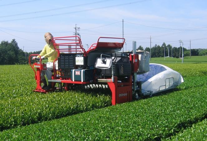 Récolte du thé mécanisée au Japon