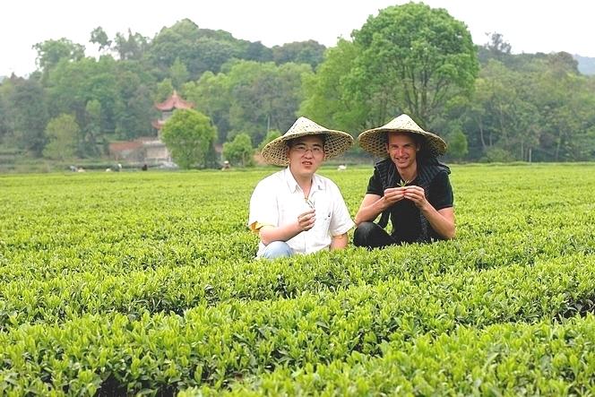 Ye Yingkai, producteur de thés du Fujian