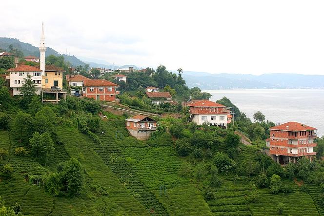 Montagnes couvertes de thé sur les rives de la Mer Noire