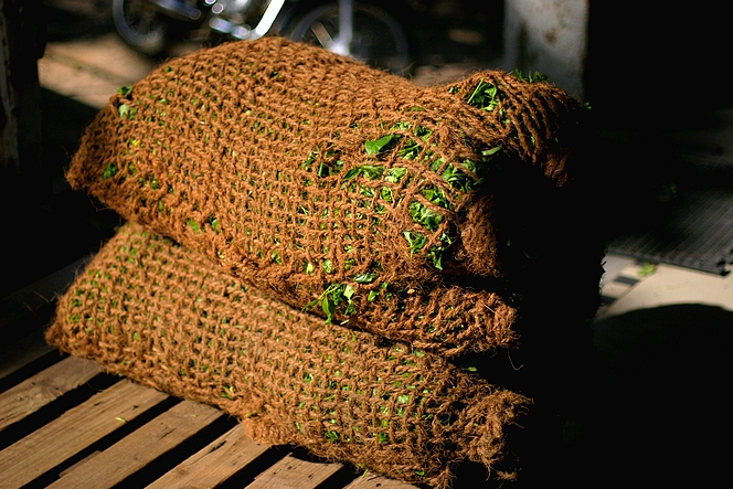 Sacs remplis de feuilles de thé fraîches