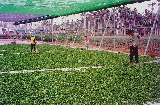 Thés semi-fermentés bien soignés à Taïwan.