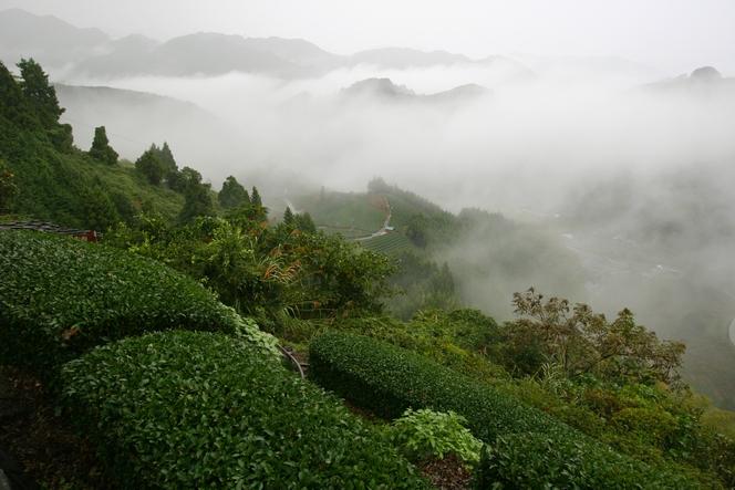 A Ryogôchi, on produit des Gyokuro et Sencha de grande qualité.
