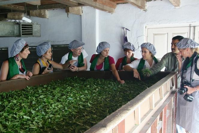 L'équipe du Palais des Thés à Tomsong. Chacun prend des feuilles de thé au creux de la main et hume avec bonheur.