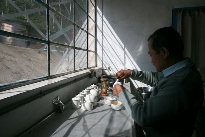 Dégustation de thé à la factory de Teesta Valley Tea Estate.
