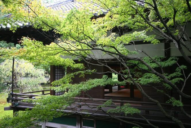 Le temple Shoren-In à Kyoto : un havre de sérénité