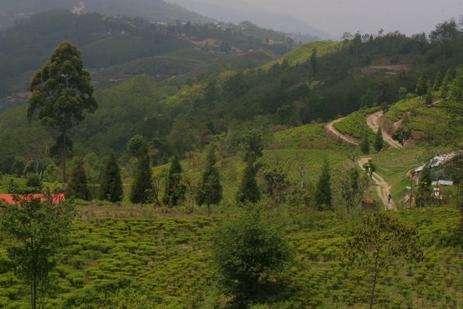 Vue splendide depuis la plantation de Kuwapani