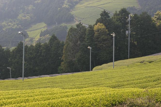 Japon : savourer les meilleurs thés en restant zen