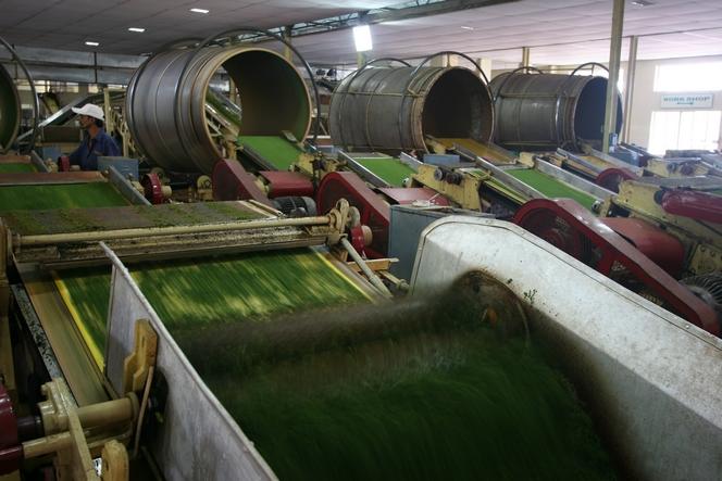 Machines utilisées pour fabriquer le thé en sachet