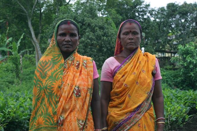 En Assam, la récolte du thé est hiérarchisée