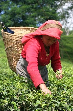 Une hotte de Noël remplie de feuilles de thé