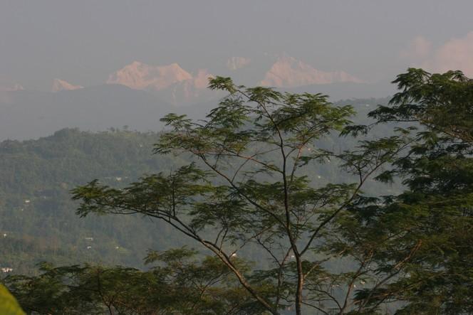 Les premiers Darjeeling d'automne arrivent