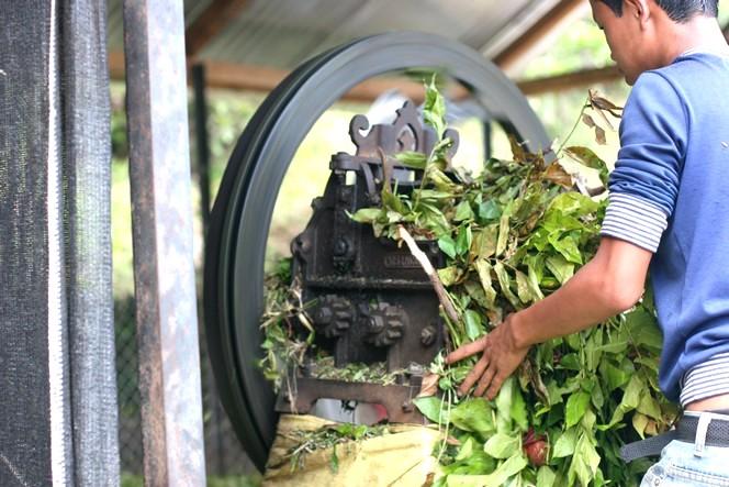 La vermiculture : une pratique très répandue