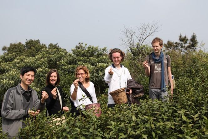Sur les routes du thé avec mes collègues