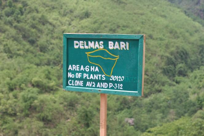 Le premier thé de « Delmas Bari » vient d'arriver