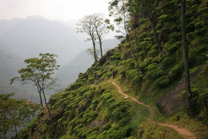 Une plantation népalaise située au bout du monde