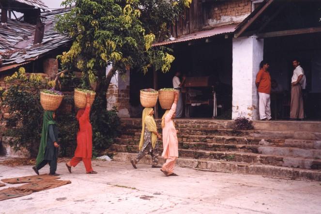 Visite dans l'Himachal Pradesh (Inde)