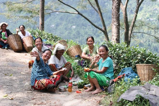 Une pause dans les plantations de thé