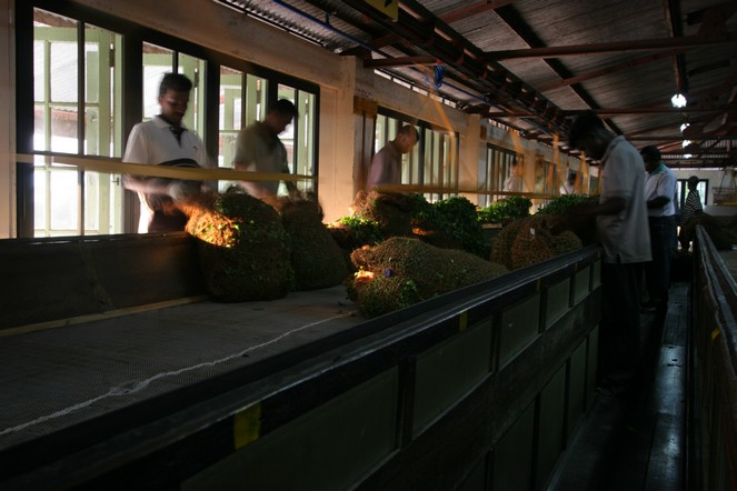 Une récolte d'hiver au Sri Lanka