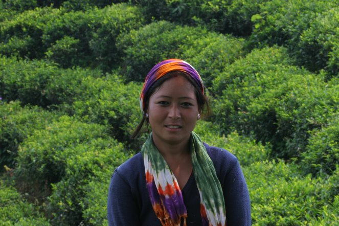 En attendant les thés de Darjeeling