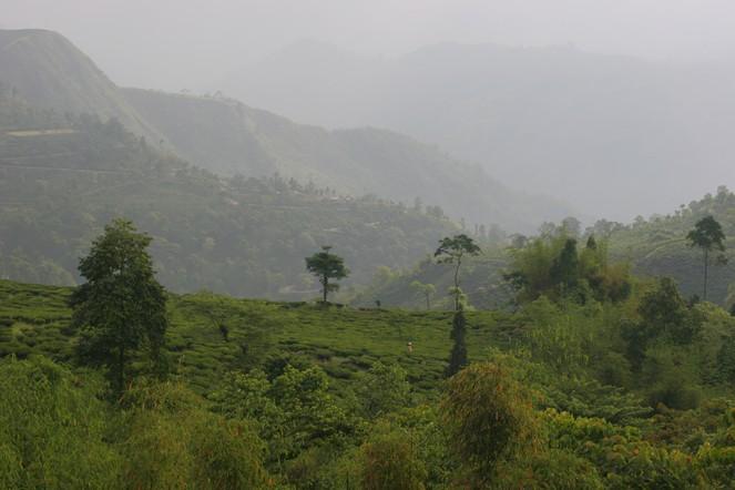 Des nouvelles de Darjeeling