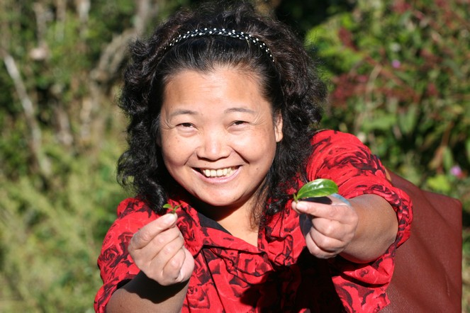Hommage aux femmes qui travaillent dans le thé