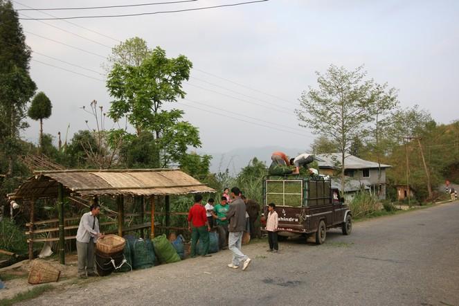 La récolte du thé dans le sud du Sri Lanka