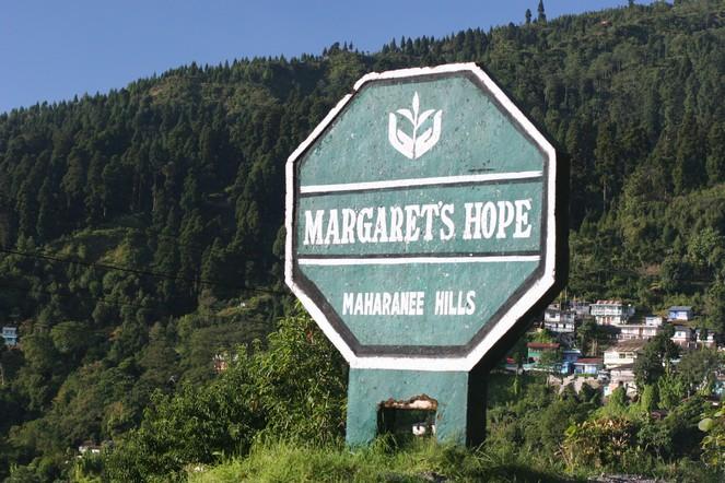 Un magnifique thé en provenance de Margaret's Hope