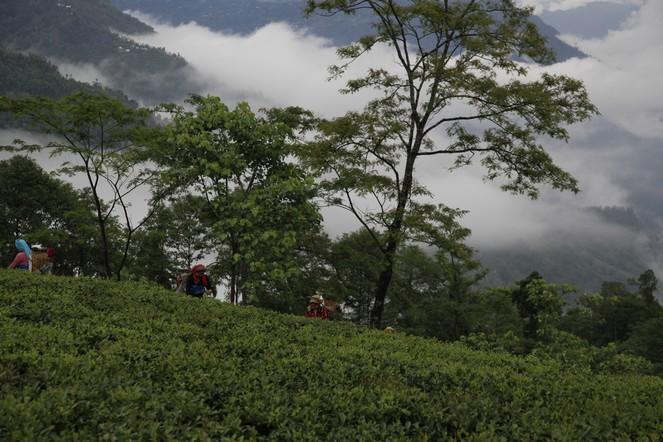 La pluie tombe à Darjeeling