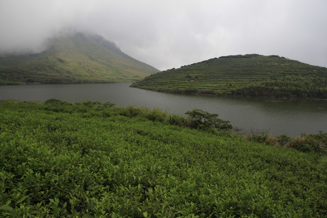 Une plantation de thé exceptionnelle