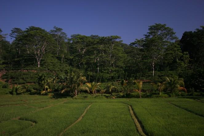 Poétiques plantations de thé