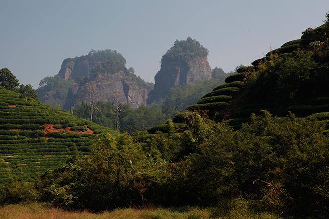 Le Da Hong Pao : un oolong légendaire