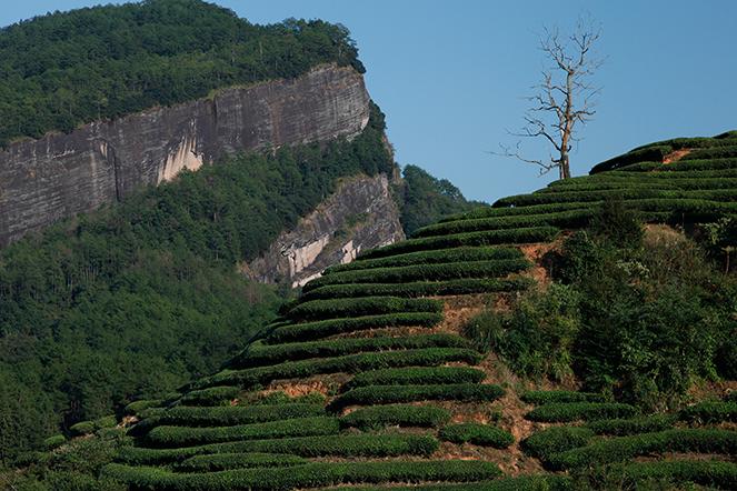 Les « rock teas », une appellation mystérieuse