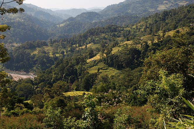 Le Népal : des thés et des paysages exceptionnels