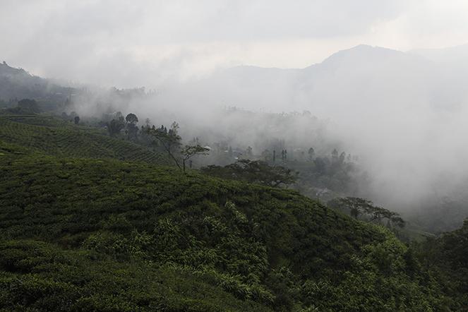 Des nouvelles des Darjeeling de Printemps