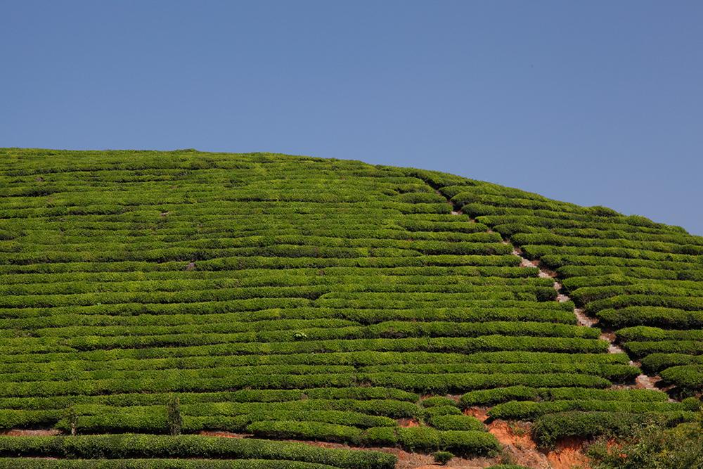 Un paysage vert et bleu chercheur de th for Paysage vert