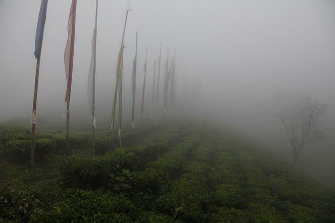 Mes pensées vont vers le Népal