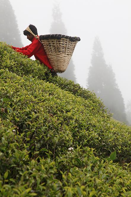 Les plus beaux thés du monde au pied du sapin