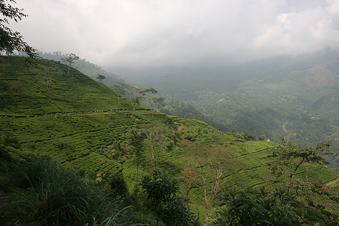Paysage de Darjeeling