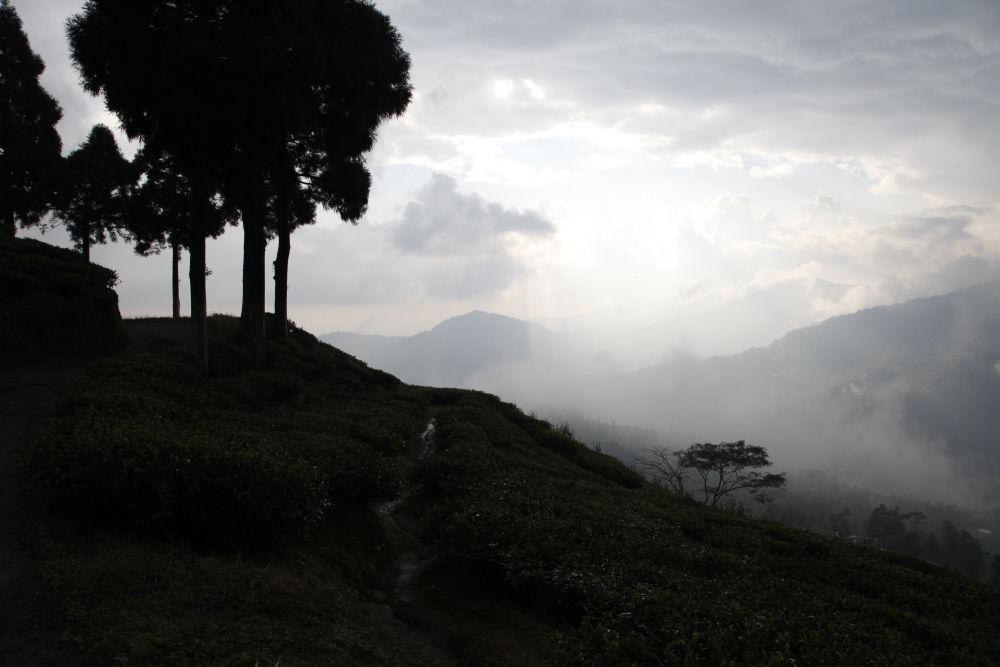 En attendant la pluie à Darjeeling