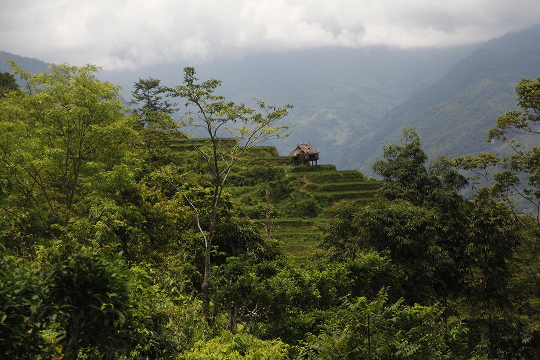Viêt-Nam Caobo