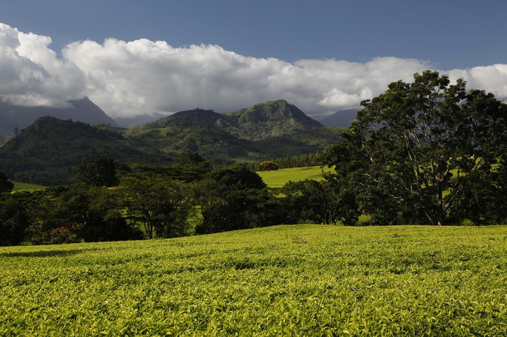 Magnifique paysage au Malawi