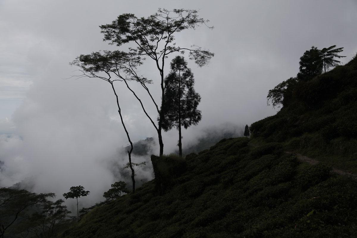 À Darjeeling, une situation dangereuse