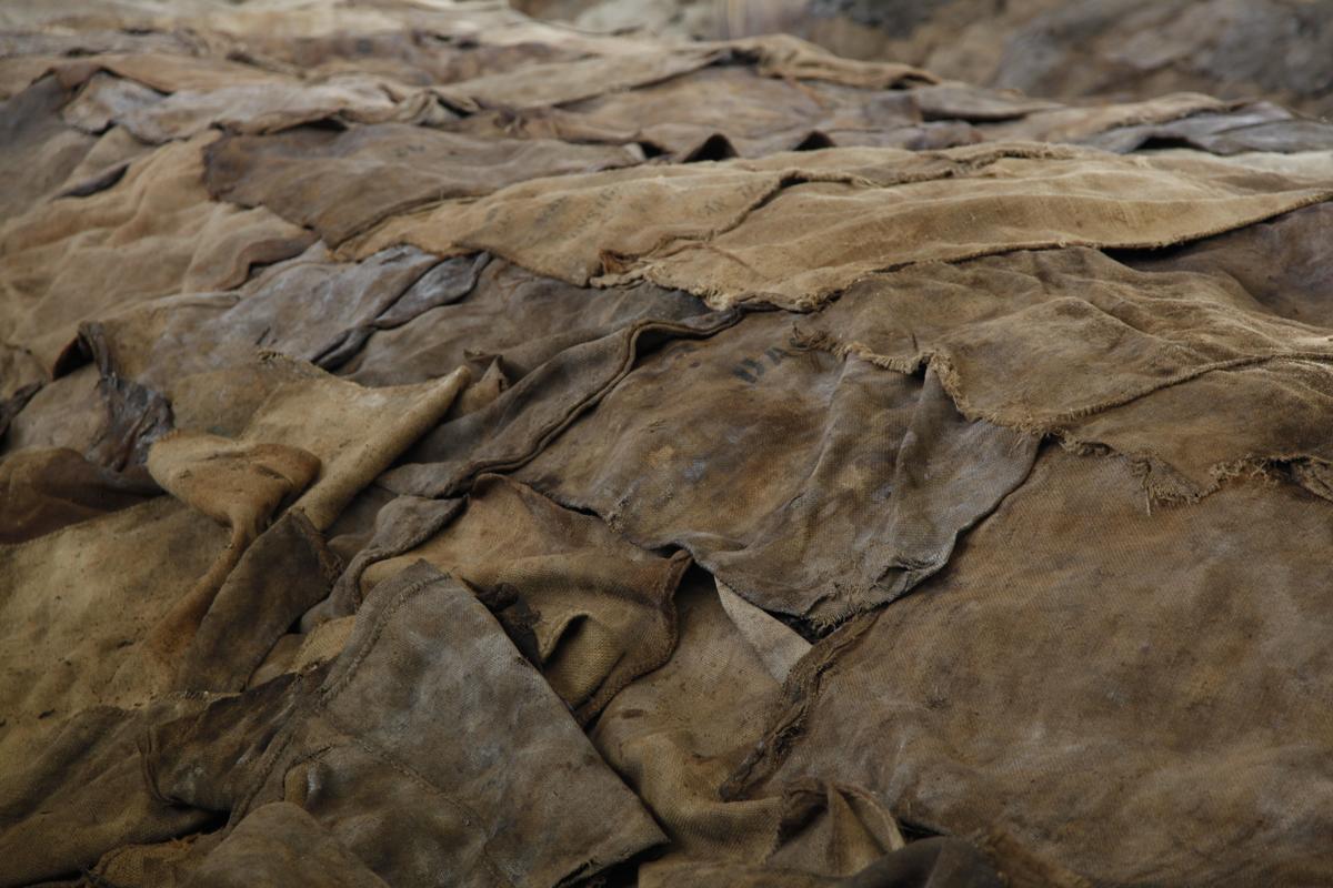 Pu erh cuits : une palette automnale
