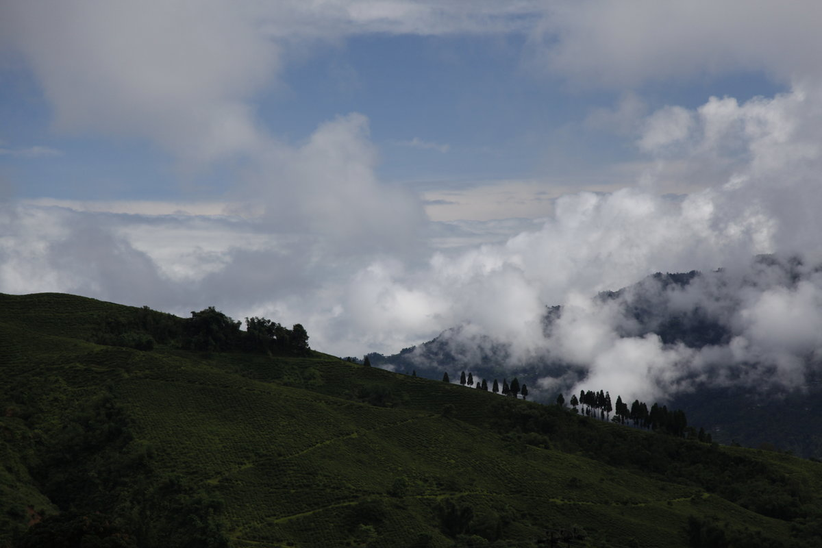 Darjeeling, faits et chiffres