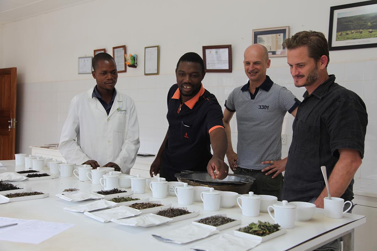 Déguster les thés d'autres fermiers