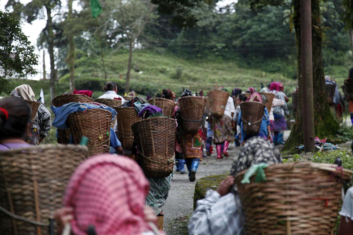 A Darjeeling, une situation très difficile