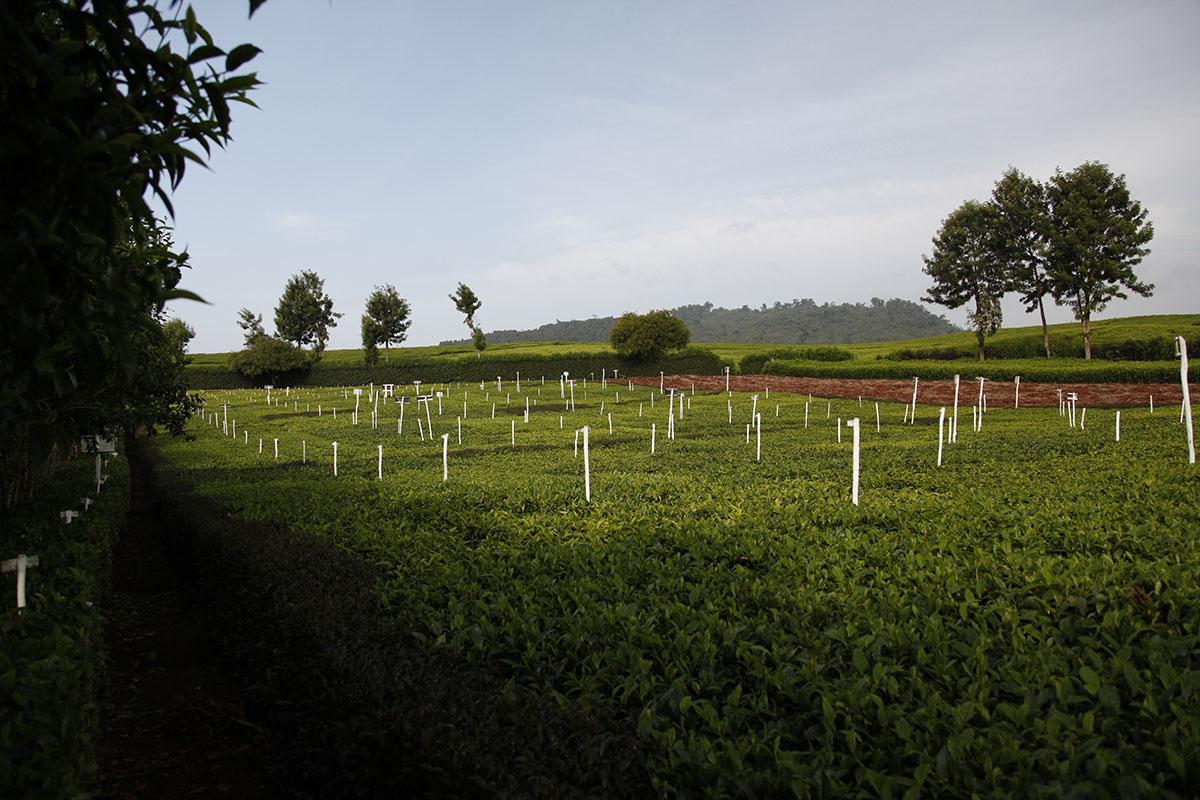 Au Kenya, pour fêter la fin du confinement