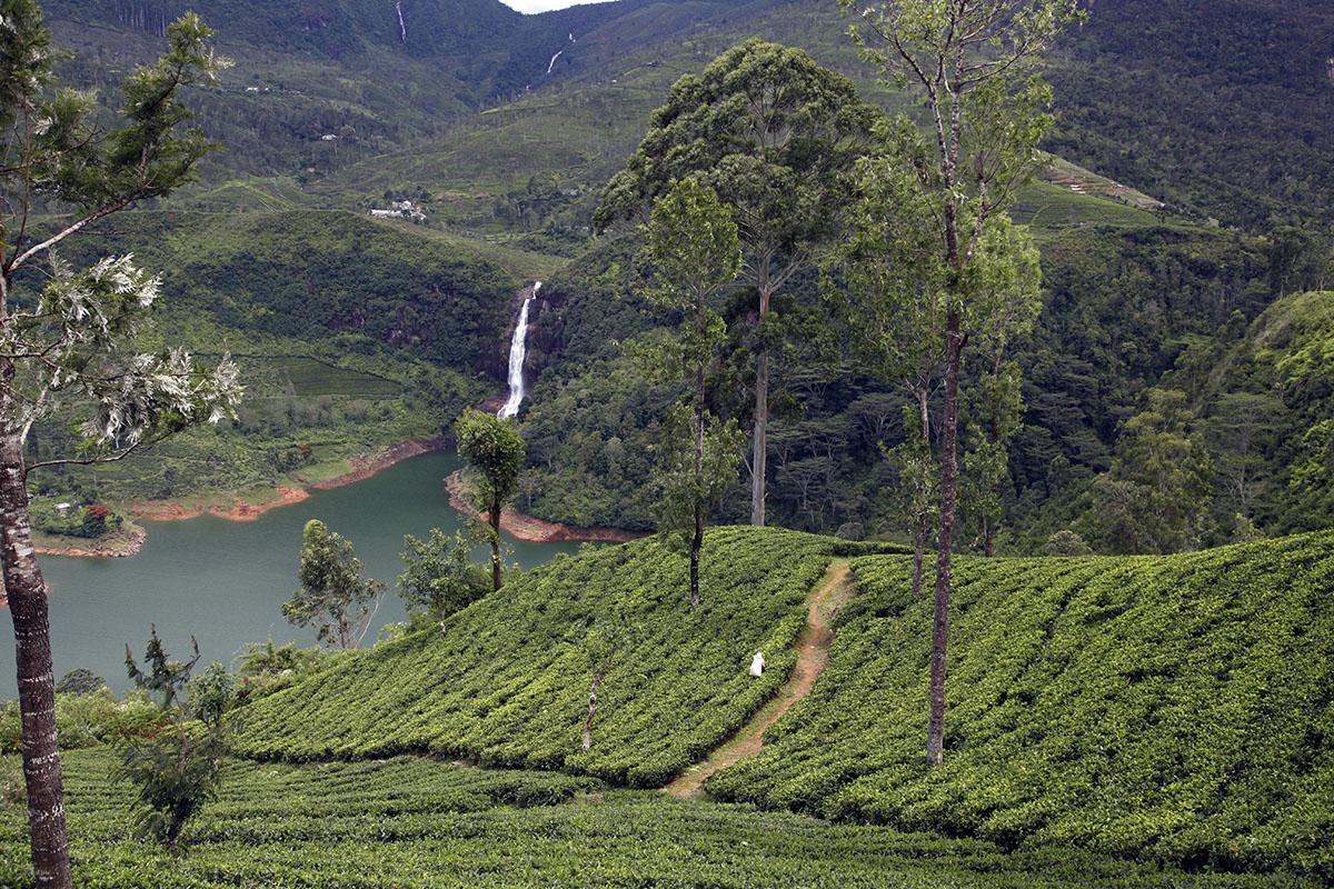 Un beau paysage ne fait pas toujours un bon thé